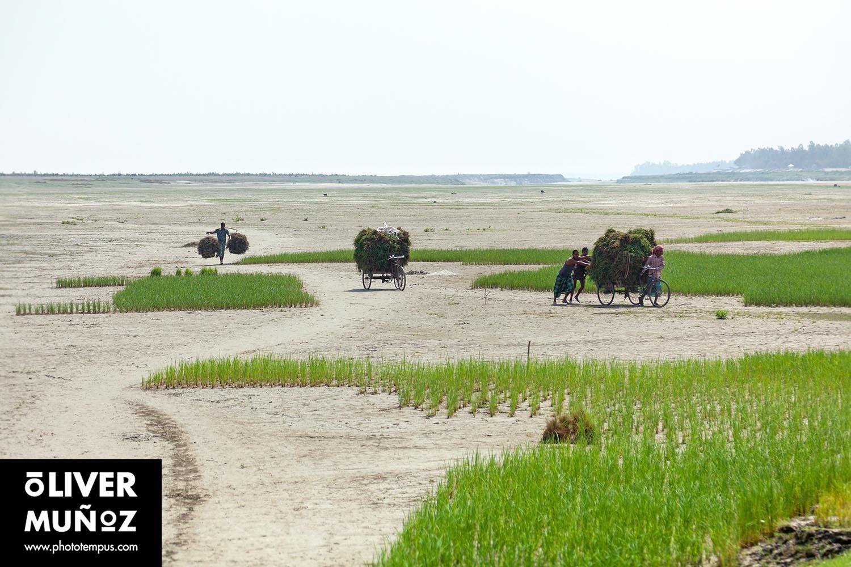 Los bancos de arena de Jamuna