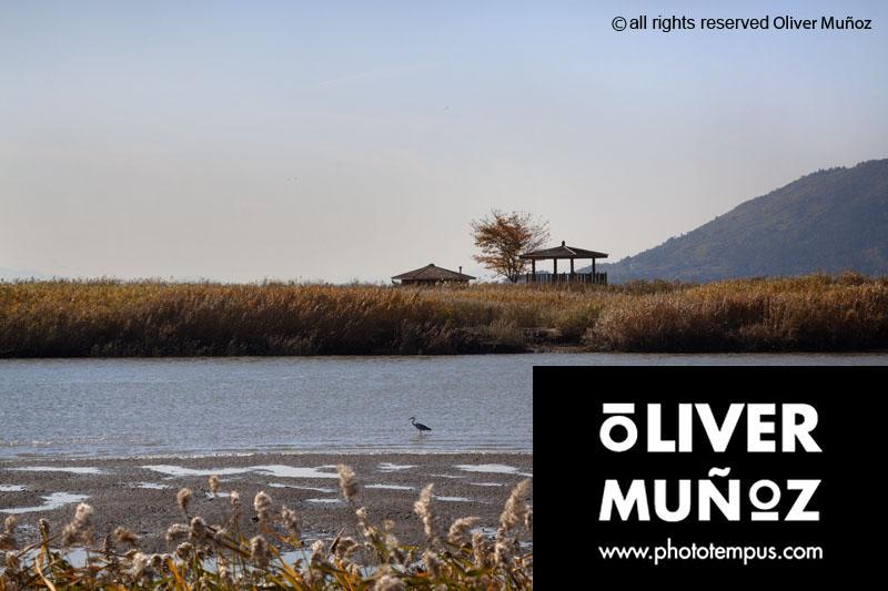 El paraíso natural de Suncheonman , santuario para las aves ( Corea del Sur )