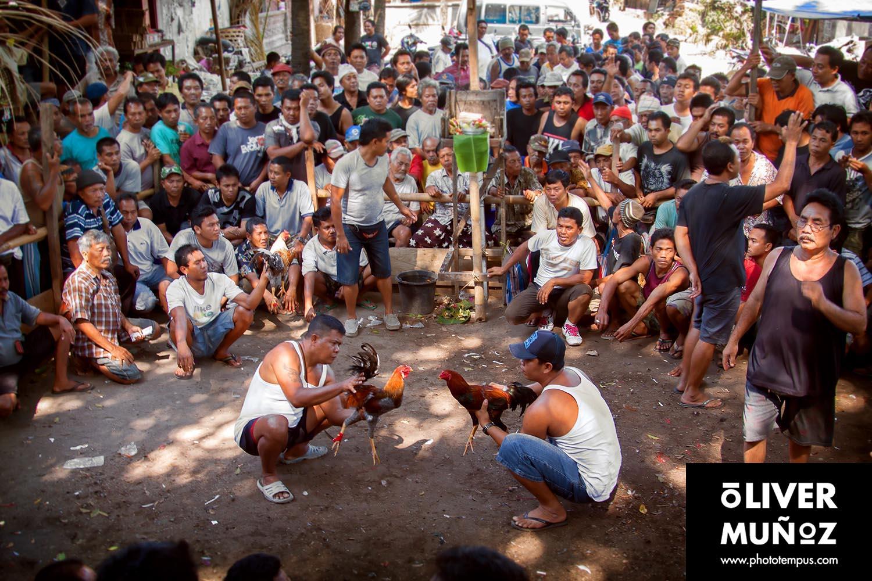 Peleas de gallos en Bali